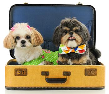 Transport af hunde på flyrejser