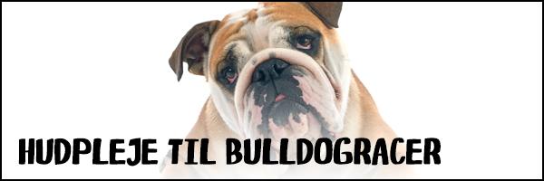 Hudpleje til Bulldog racer