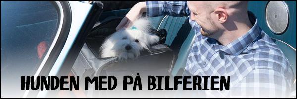 Hunden med på bilferien