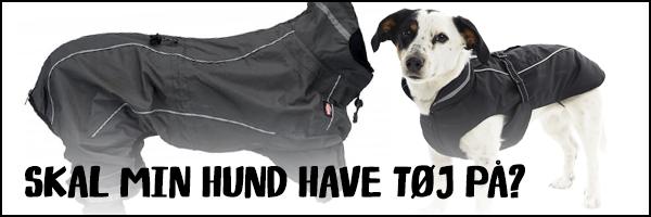 Skal min hund have tøj på