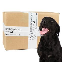 Large Breed Surprise Box