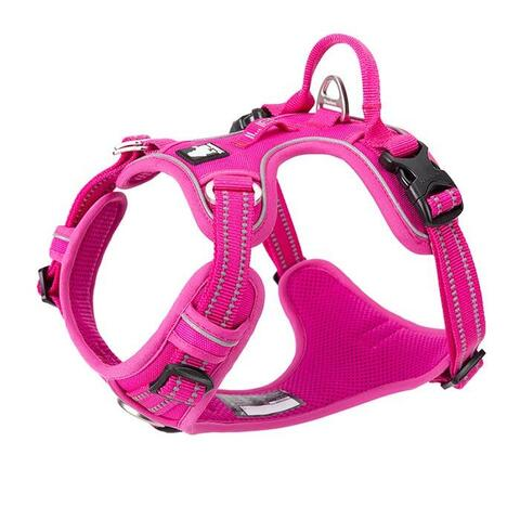 True Love Explosion Proof | Hundesele → Pink