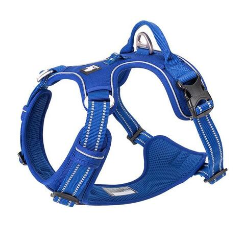 True Love Explosion Proof | Hundesele → Royal Blue