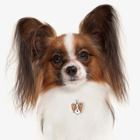 My Family | Hundetegn Papillon