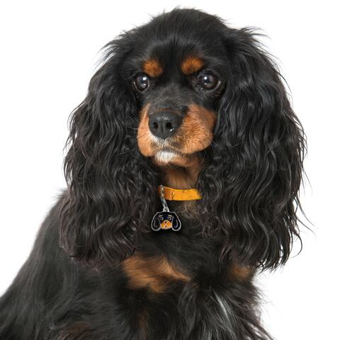 My Family |Hundetegn Cavalier King Charles Spaniel | Black and Tan