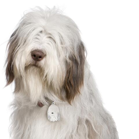 My Family | Hundetegn Bearded Collie