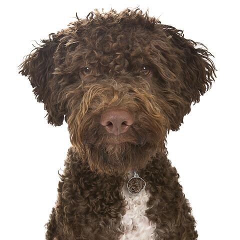 My Family | Hundetegn Lagotto