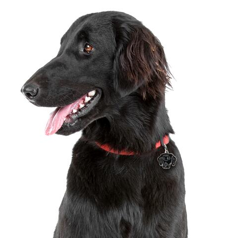 My Family | Hundetegn Flat Coated Retriver