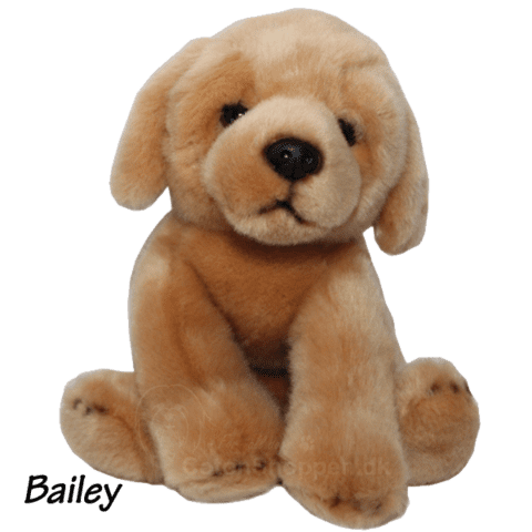 Golden retriever | Labrador bamse / Bailey