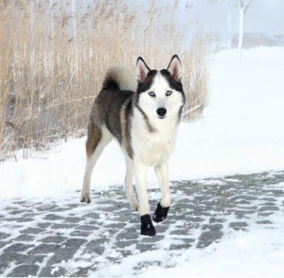 1aaf7f08065 Walker Active Protective boots | hundestøvler 2 stk.