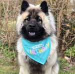 It's my Birthday Bandana | Turkis